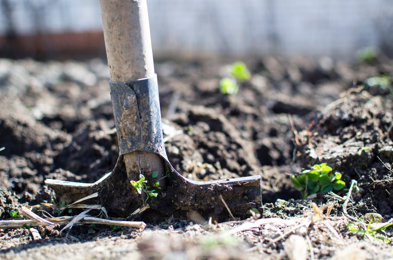 permaculture garden soil