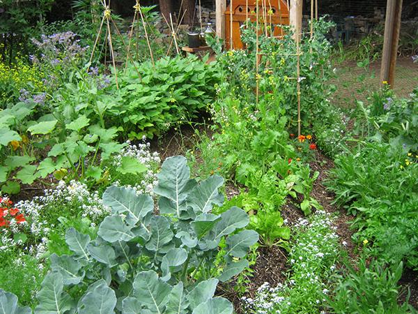 permaculture garden design ideas