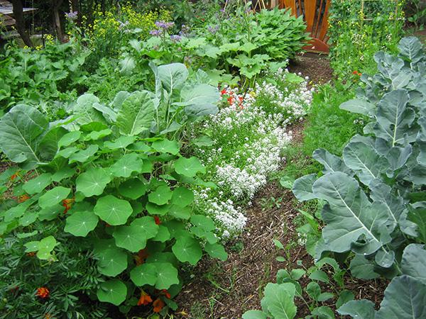 first year garden abundance