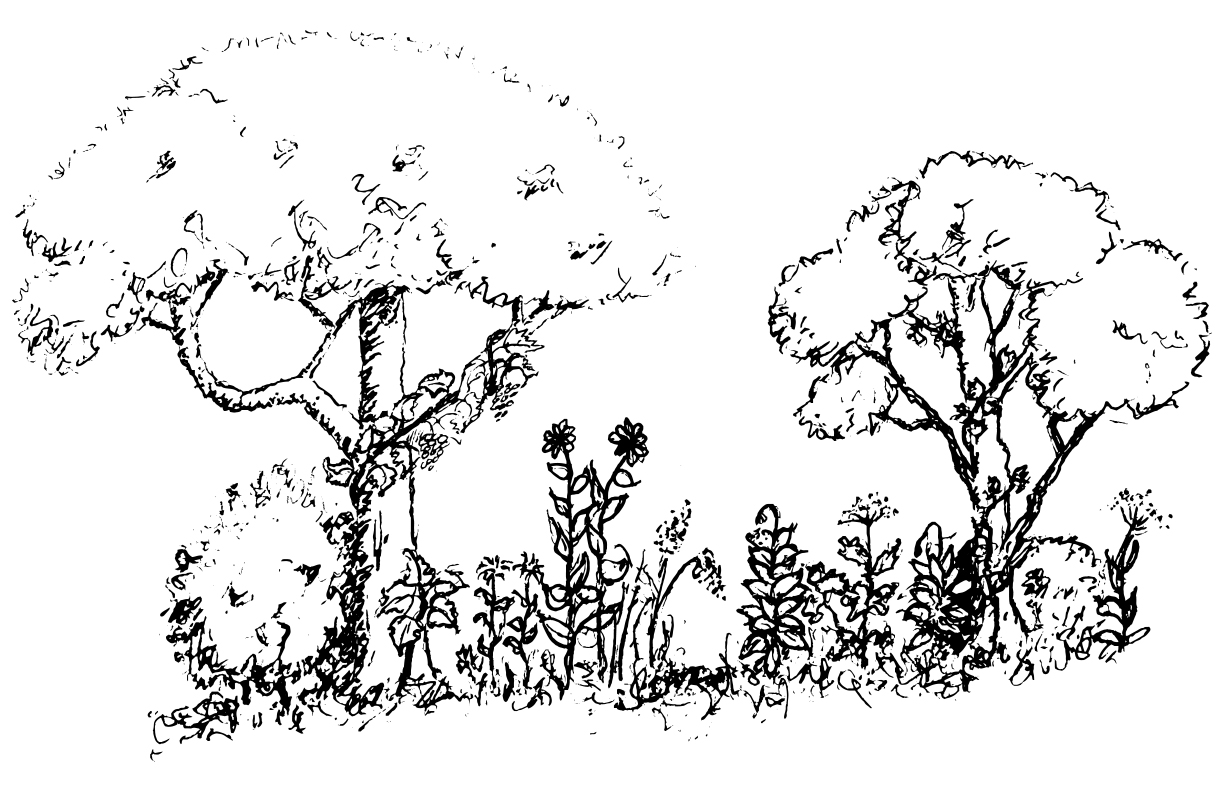 Sketch of a food forest
