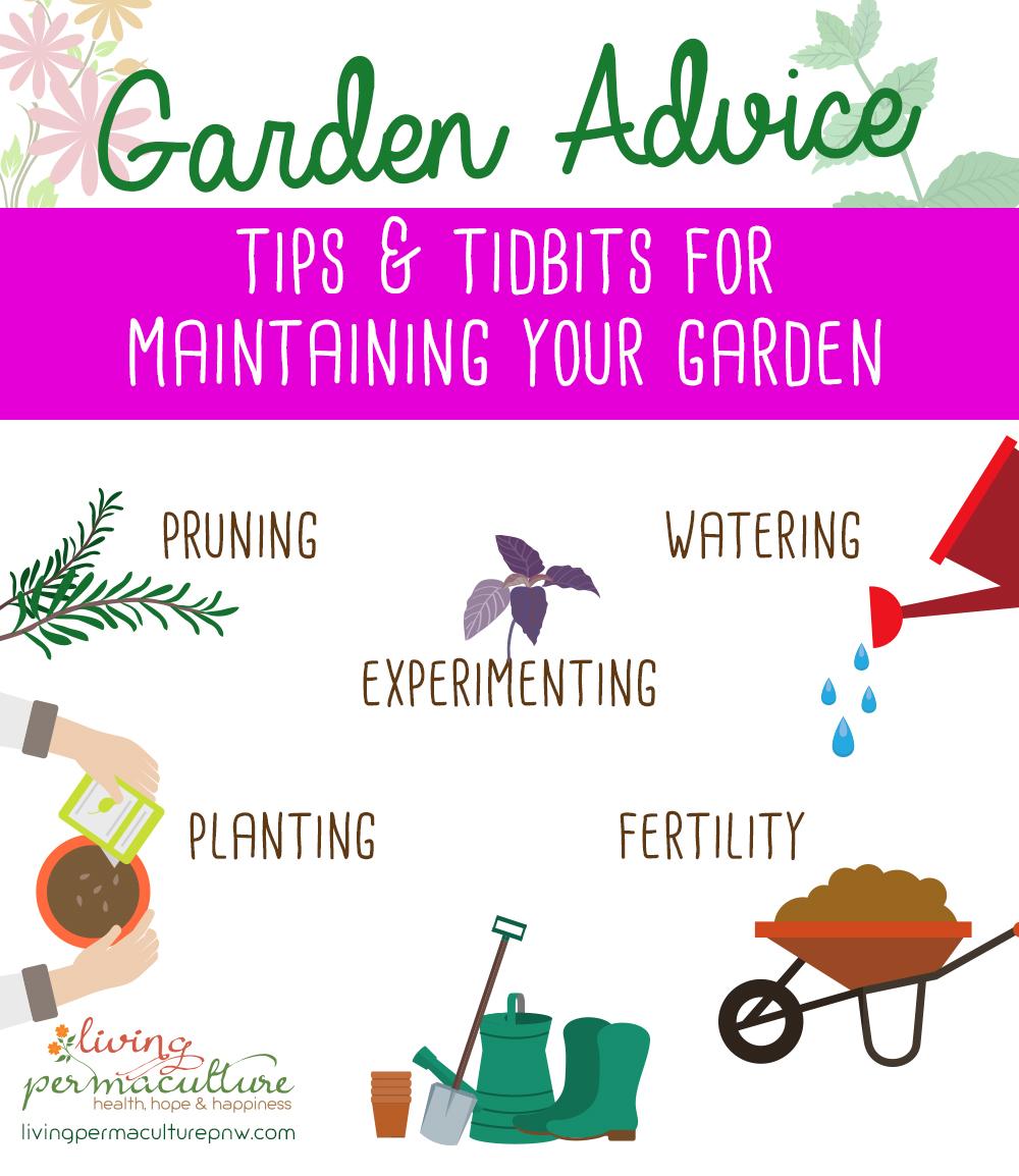 vegetable garden advice