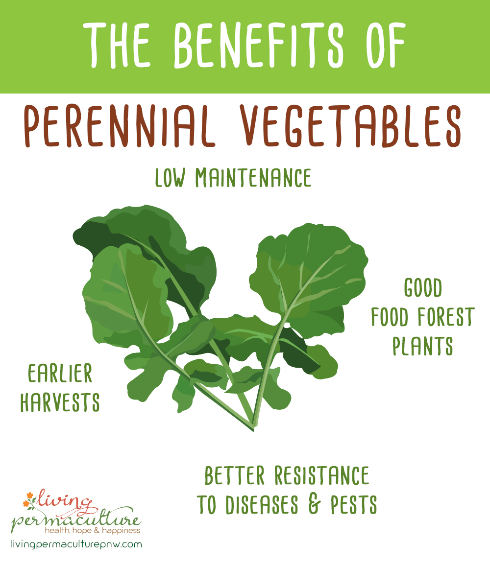 benefits of perennial vegetables