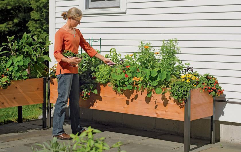 elevated garden beds