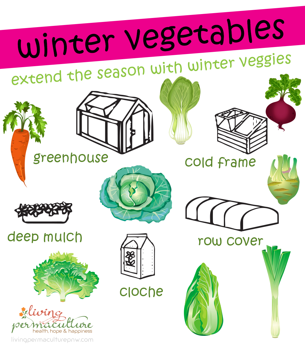 growing winter vegetables